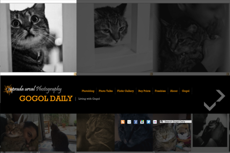 Image of gogol daily website