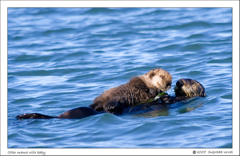 Mama and baby otter\
