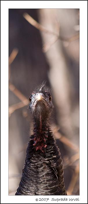 Beak Up\