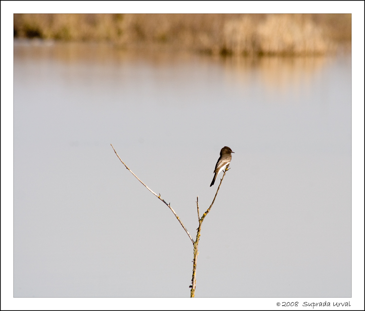 Bird on twig\