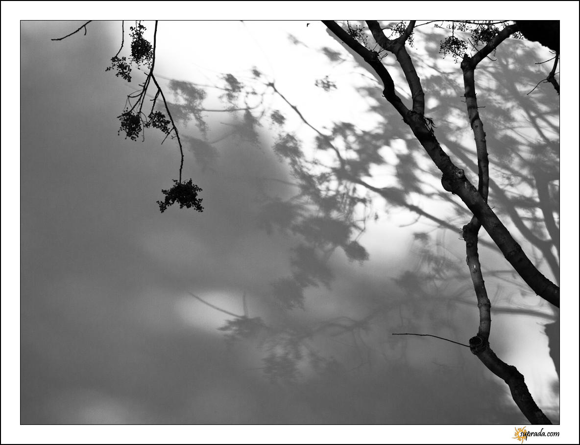 Berries and Shadows - 3