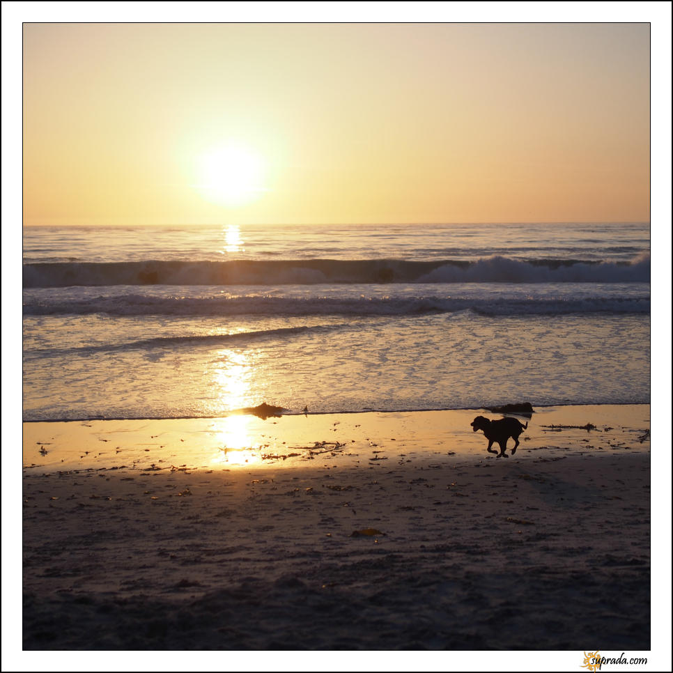 Dogs on beach - 2