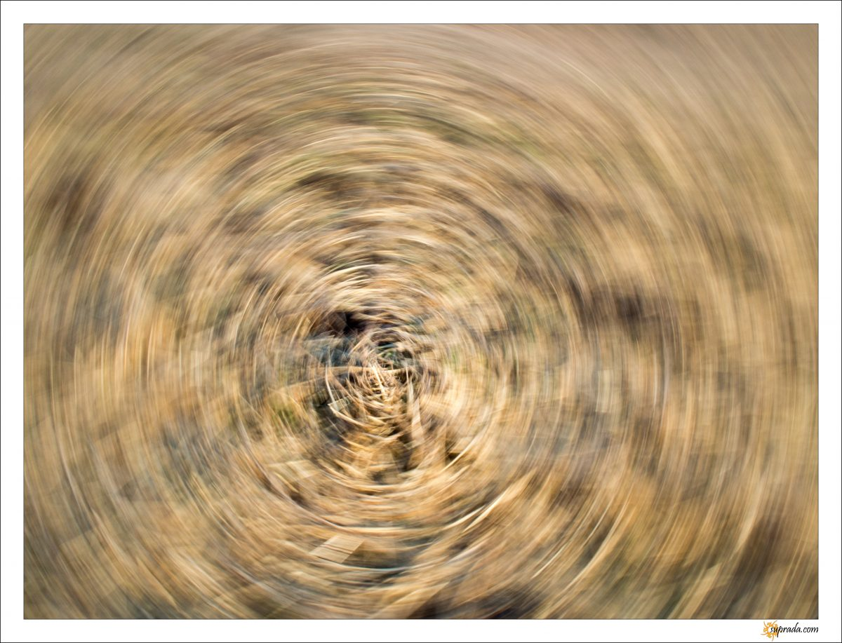 Dizzy Dried Grass
